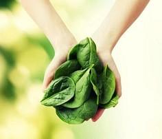 AdictaMente: Los beneficios de comer espinacas