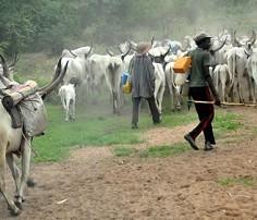 Image result for Herdsmen destroy UNILORIN multi-million naira research farms