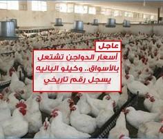 Image result for أسعار الدواجن تشتعل بالأسواق.. وكيلو البانيه يسجل رقم تاريخي